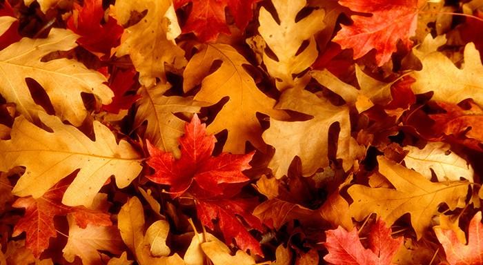 autunno inverno dermatite seborroica