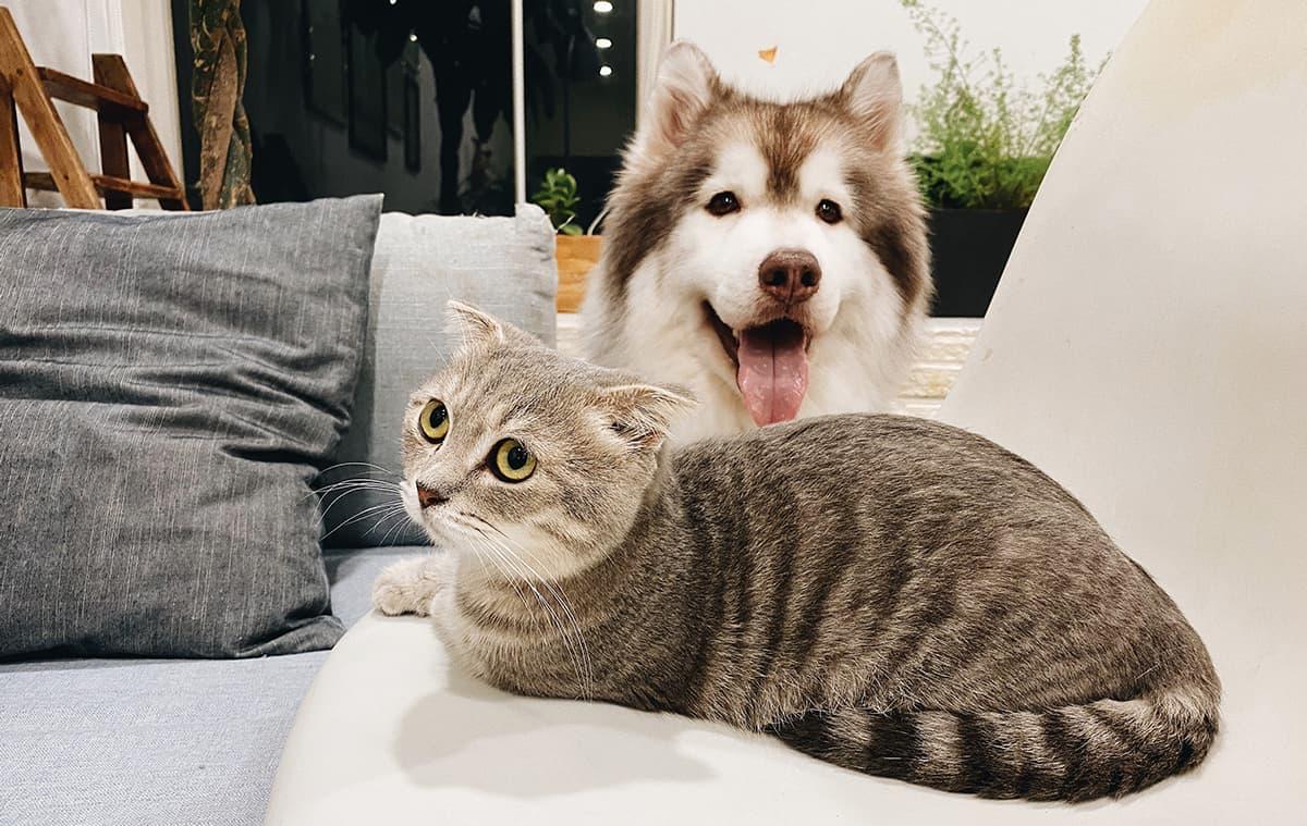 dermatite seborroica e animali domestici